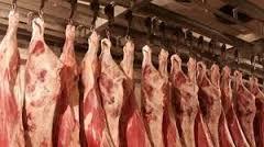 گاو ماده - خرید عمده گوشت گاو ماده