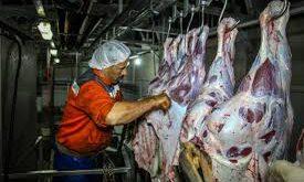 گوشت گاو کشتار روز