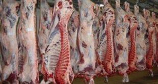 فروش گوشت گوساله