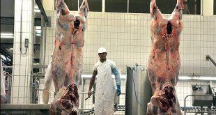 خرید و فروش گوشت گوساله کشتارگاه
