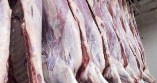 فروش گوشت گوساله ارزان