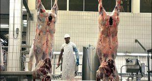 گوشت گوساله تهران