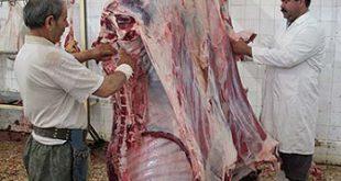 کشتارگاه گوشت گوساله