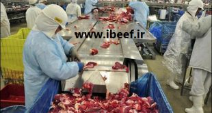 گوشت منجمد برزیلی