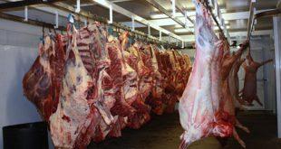 گوشت گوساله کشتارگاه