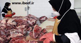گوشت ماده گاو