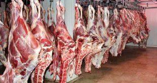 فروش گوشت ماده