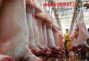 فروش گوشت گوسفندی