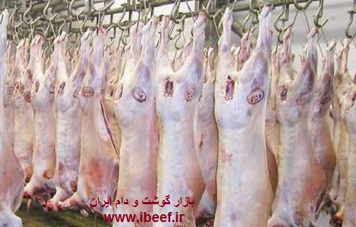 واردات گوشت گوسفندی